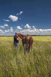 koń na pastwisku